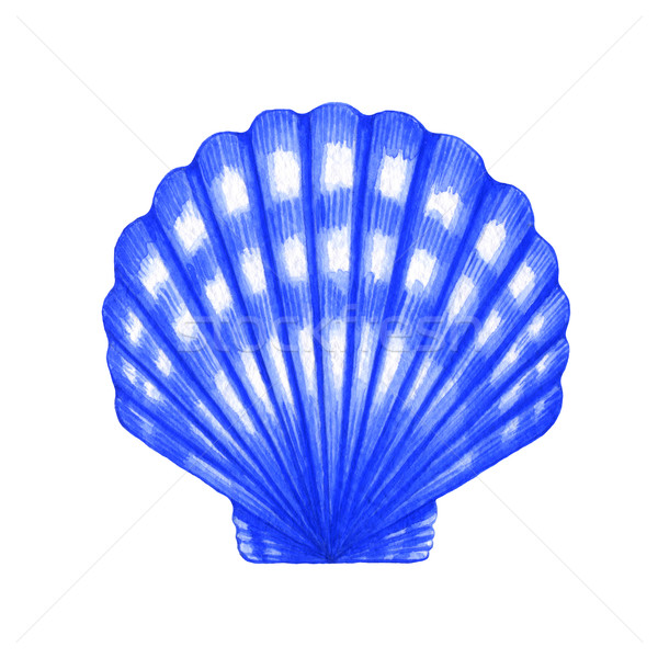 Shell couleur pour aquarelle illustration blanche alimentaire mer Photo stock © jara3000