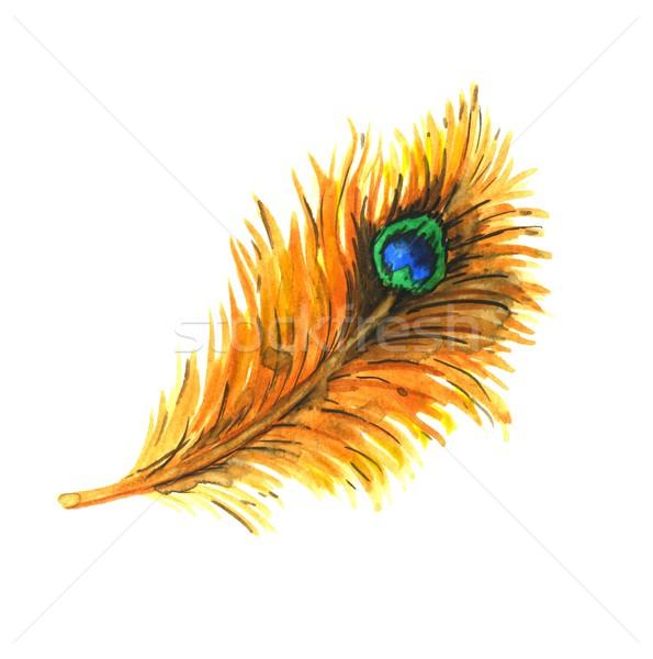 Peacock feather Stock photo © jara3000