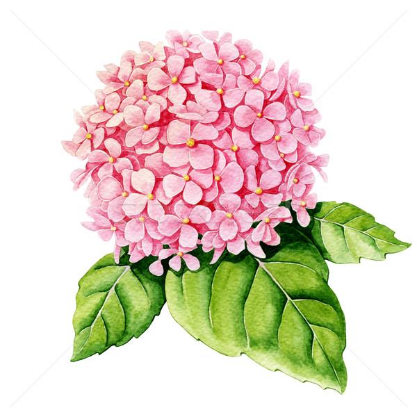 ピンク 水彩画 白 花 自然 葉 ストックフォト © jara3000