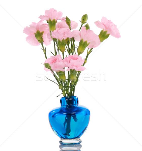 Rosa blau Vase weichen Reflexion Stock foto © jarenwicklund