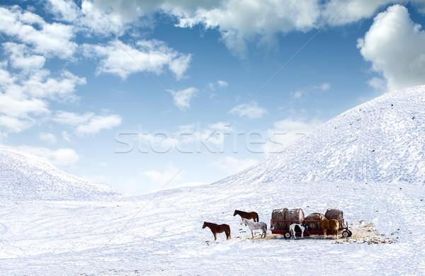 Horses out on snow covered field Stock photo © jarenwicklund