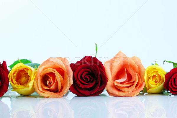 Red, yellow and peach color roses lined up isolated on white  Stock photo © jarenwicklund