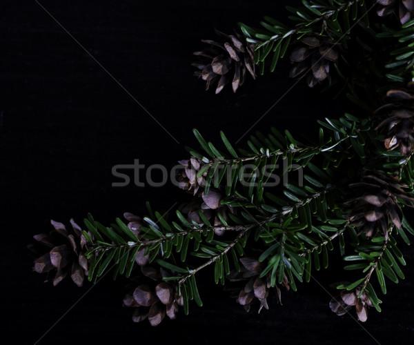 Pine bough with pine cones on black wood background Stock photo © jarenwicklund
