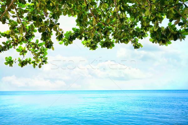 Green leaves from overhanging tree over blue ocean horizon Stock photo © jarenwicklund