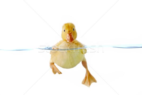 Sevimli sarı ördek yavrusu yüzme su görünür Stok fotoğraf © jarenwicklund