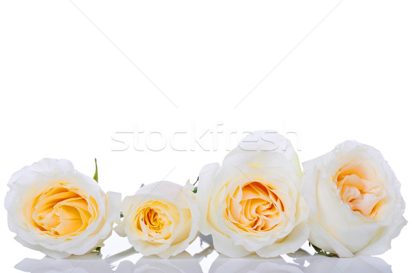 Four white roses Stock photo © jarenwicklund
