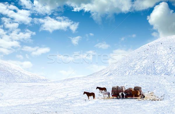 馬 外に 雪 カバー フィールド 丘 ストックフォト © jarenwicklund