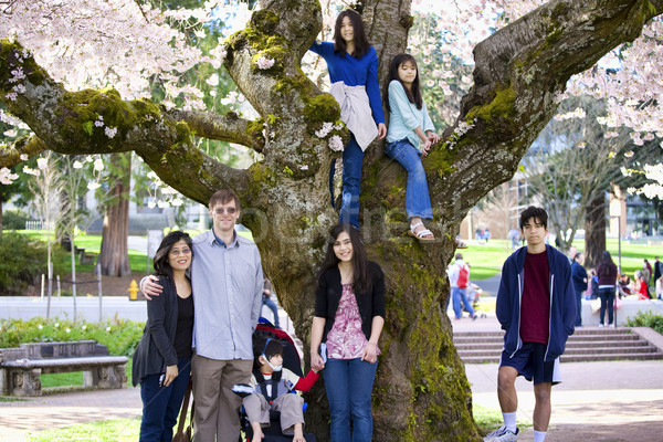 Family of seven by large cherry tree in full bloom Stock photo © jarenwicklund