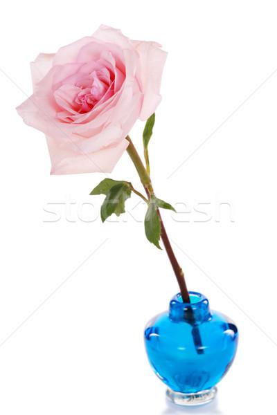 Single pink rose in blue vase Stock photo © jarenwicklund