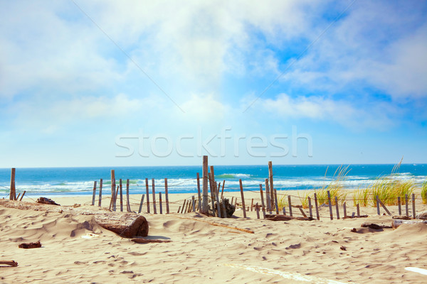 Sandy ocean shoreline with dunes and grassy edge, fencing Stock photo © jarenwicklund