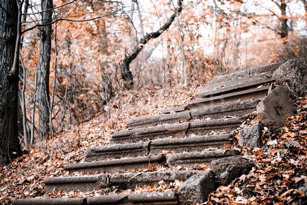 öreg kő lépcsőfeljáró ősz Csehország fű Stock fotó © jarin13