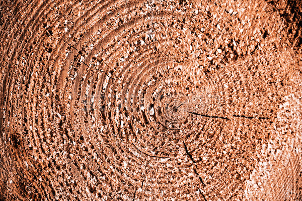 wooden texture Stock photo © jarin13