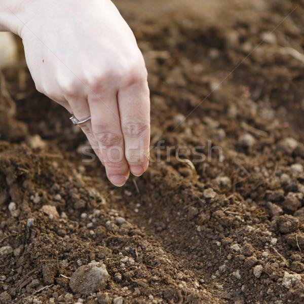 Vrouw hand zaaien zaad tuinieren tuin Stockfoto © jarin13