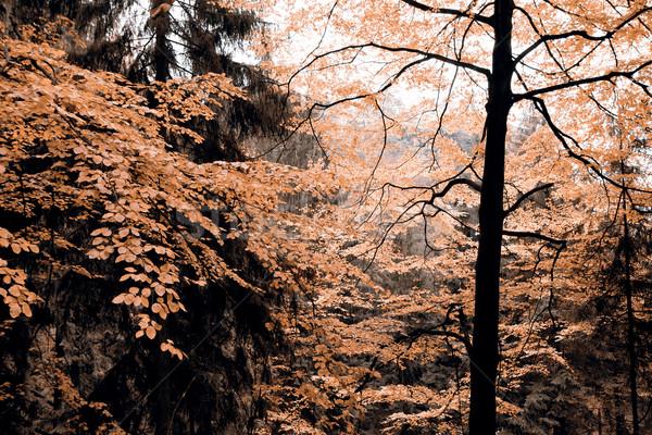Sonbahar orman Çek Cumhuriyeti çim yol manzara Stok fotoğraf © jarin13