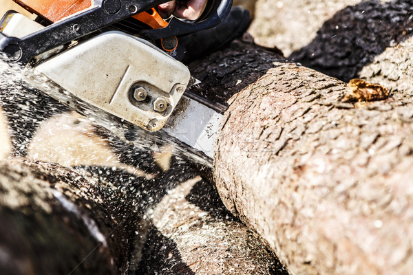 Man sawing a log in his back yard Stock photo © jarin13