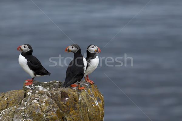 Güzel bahar çim doğa boya kuş Stok fotoğraf © jarin13