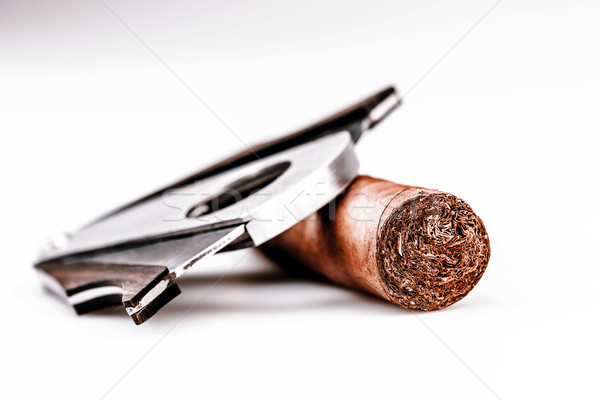 Cigar and cutter on a white background Stock photo © jarin13