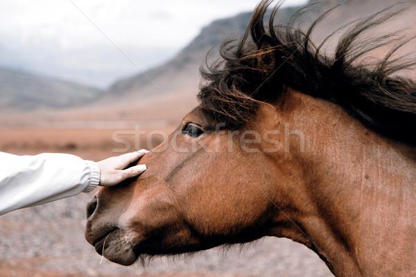 Konia piękna słońce charakter zielone portret Zdjęcia stock © jarin13