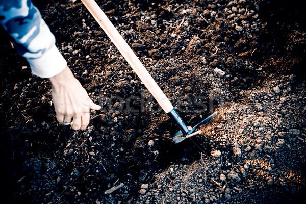 Vrouw hand zaaien zaad tuinieren groene Stockfoto © jarin13