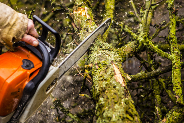 Stok fotoğraf: Adam · geri · turuncu · testere · ağaç · orman