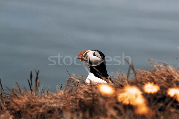 Belo primavera grama natureza pintar pássaro Foto stock © jarin13