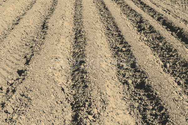 The plowed field prepared for crops Stock photo © jarin13