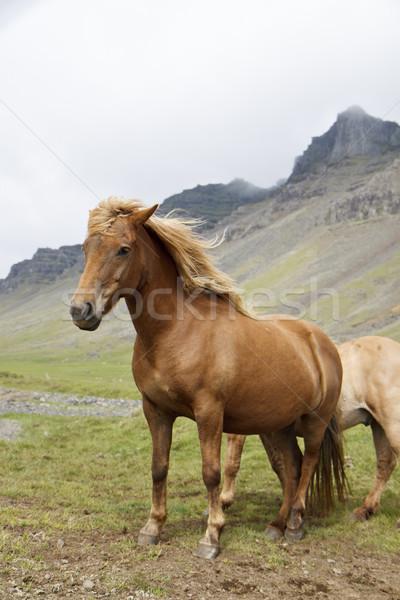 Horse Stock photo © jarin13