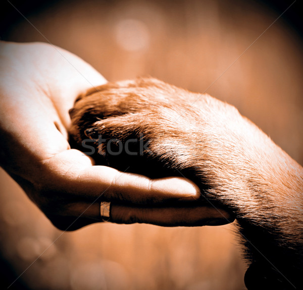 Dog´s paw and man´s hand Stock photo © jarin13
