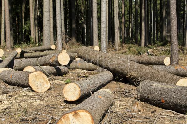 Wood logging Stock photo © jarin13