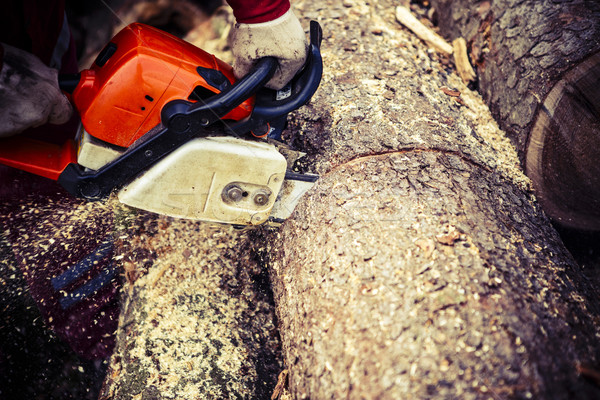 Stock photo: Man sawing a log in his back yard