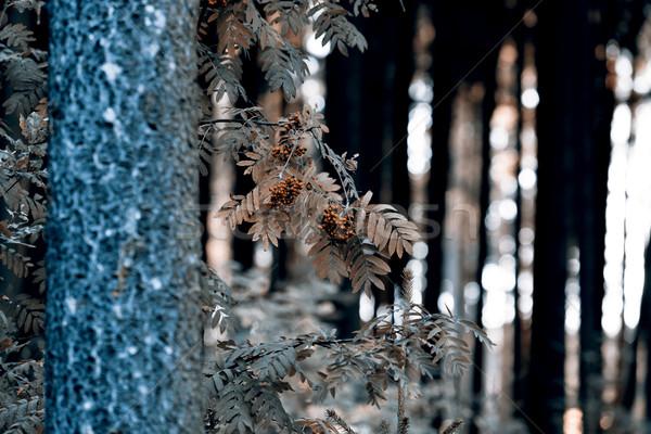 небе продовольствие лист фрукты зеленый листьев Сток-фото © jarin13