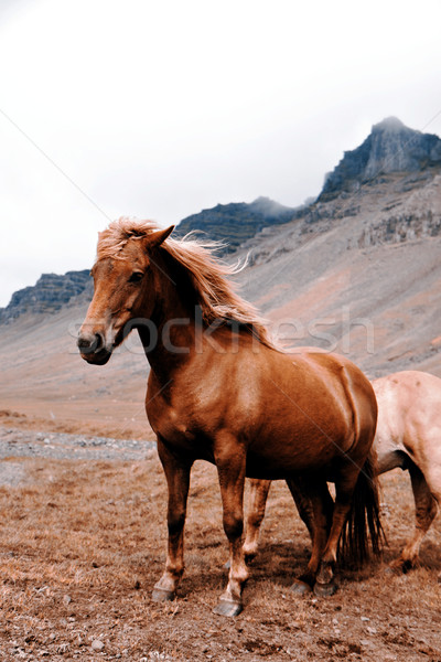 Horse Stock photo © jarin13