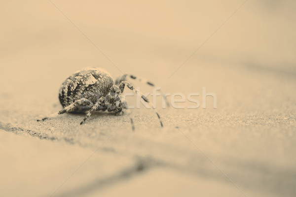 Big Orb spider with leaf Stock photo © jarin13