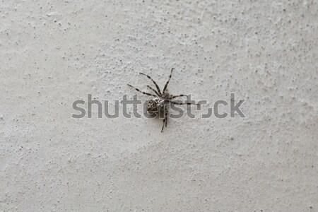 Aranha branco parede grama jardim teia Foto stock © jarin13