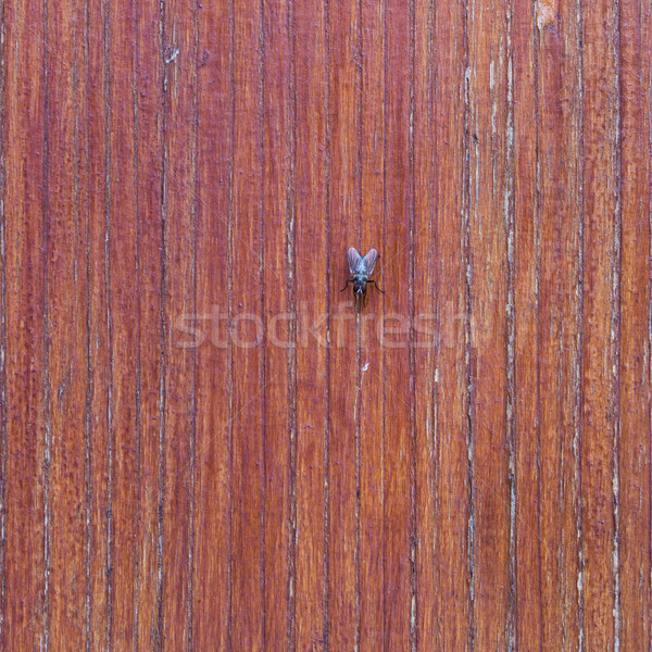 beautiful brown wooden texture or background with fly Stock photo © jarin13