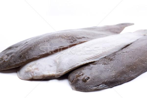üç balık taze hazır deniz beyaz Stok fotoğraf © jarp17