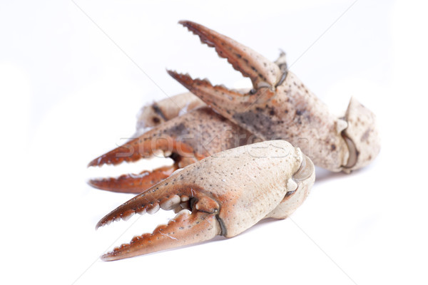 Boca três prato completo frutos do mar concha Foto stock © jarp17