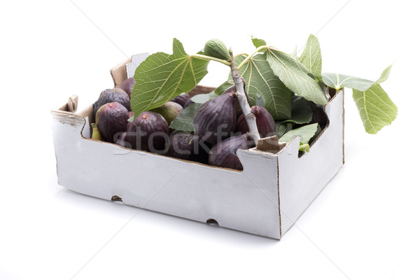 two kilogram fig Stock photo © jarp17