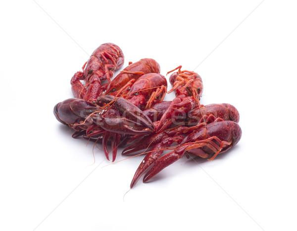several crab Stock photo © jarp17