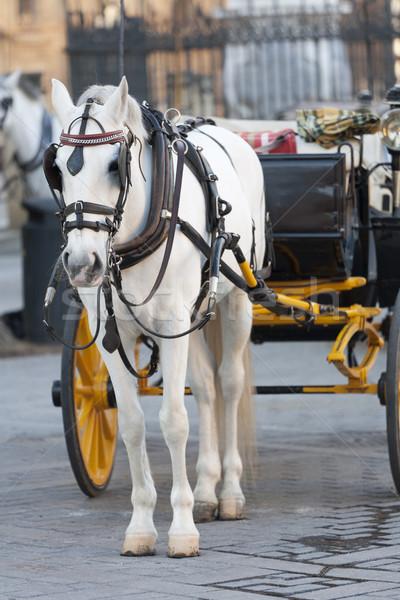 Fuvar ló visel gyönyörű retro szállítás Stock fotó © jarp17