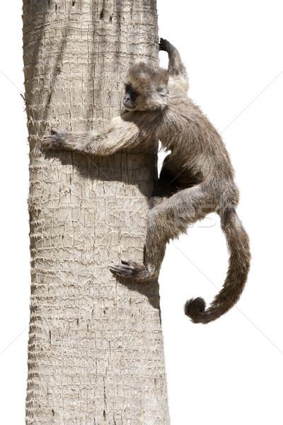 дерево небольшой обезьяны природы животного Сток-фото © jarp17
