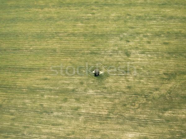 Solitário árvore verde prado olho campo Foto stock © jarp17