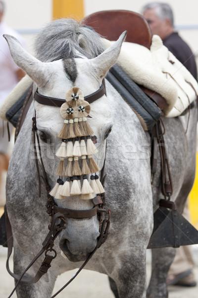 horse white  andalusian Stock photo © jarp17
