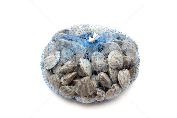 clam network Stock photo © jarp17