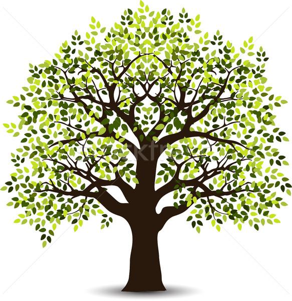 Stilizate copac proiect primăvară pădure natură Imagine de stoc © jawa123