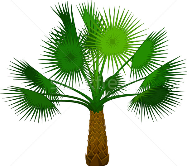 palm tree cartoon for you design Stock photo © jawa123