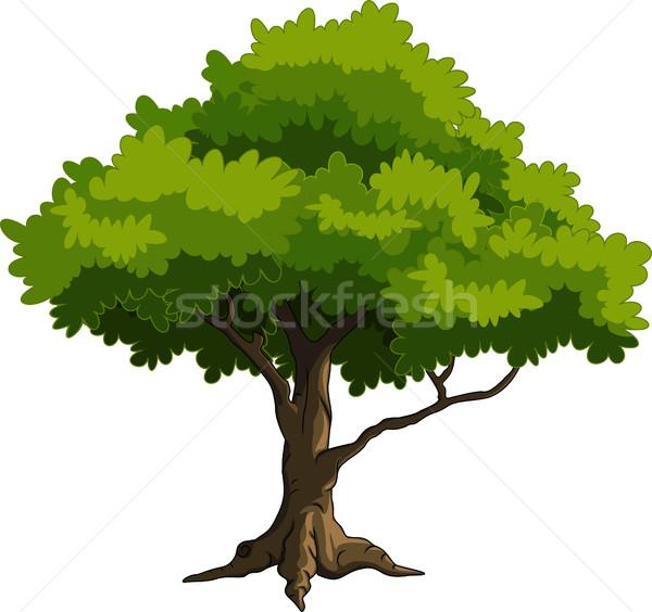 Diseno hierba madera verde otono Foto stock © jawa123