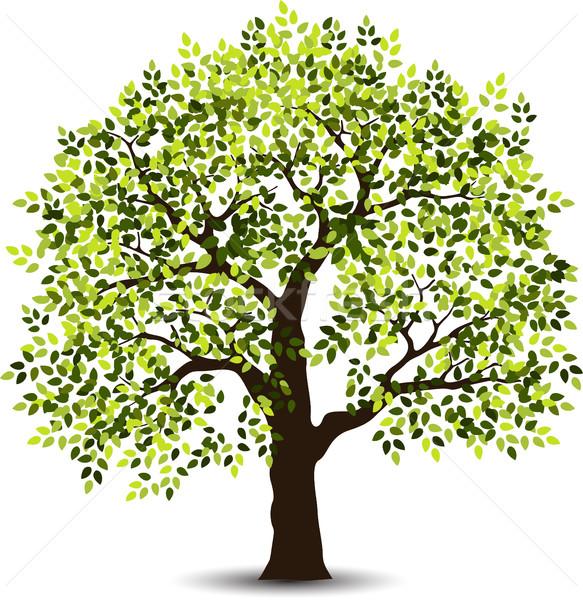 Stilizate copac primăvară pădure abstract natură Imagine de stoc © jawa123