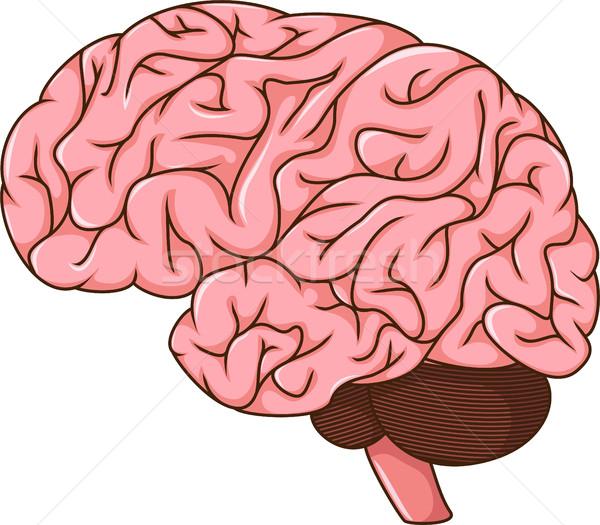 Cérebro humano desenho animado projeto arte humanismo perfil Foto stock © jawa123