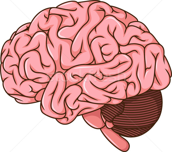 human brain cartoon Stock photo © jawa123